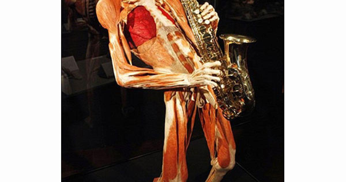 """Виставка """"Світи тіла та цикл життя"""" у місті Оффенбах-на-Майні (Німеччина) працюватиме до 4 липня. @ AFP"""