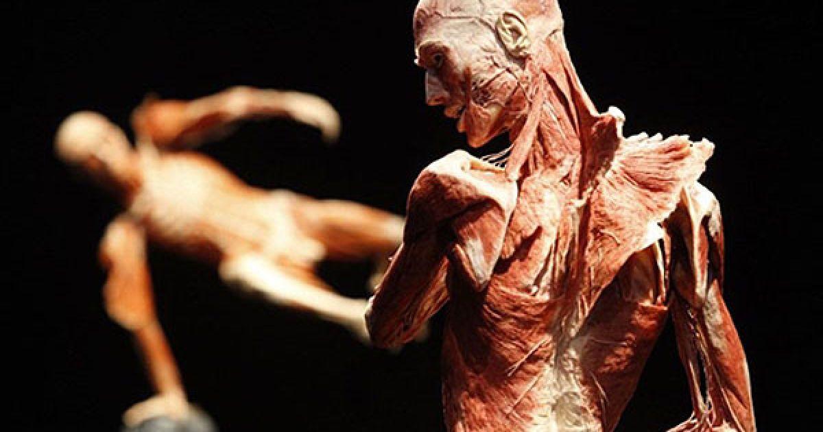 Професор анатомії Гюнтер фон Хагенс винайшов метод пластинації ще у 1977 році. @ AFP