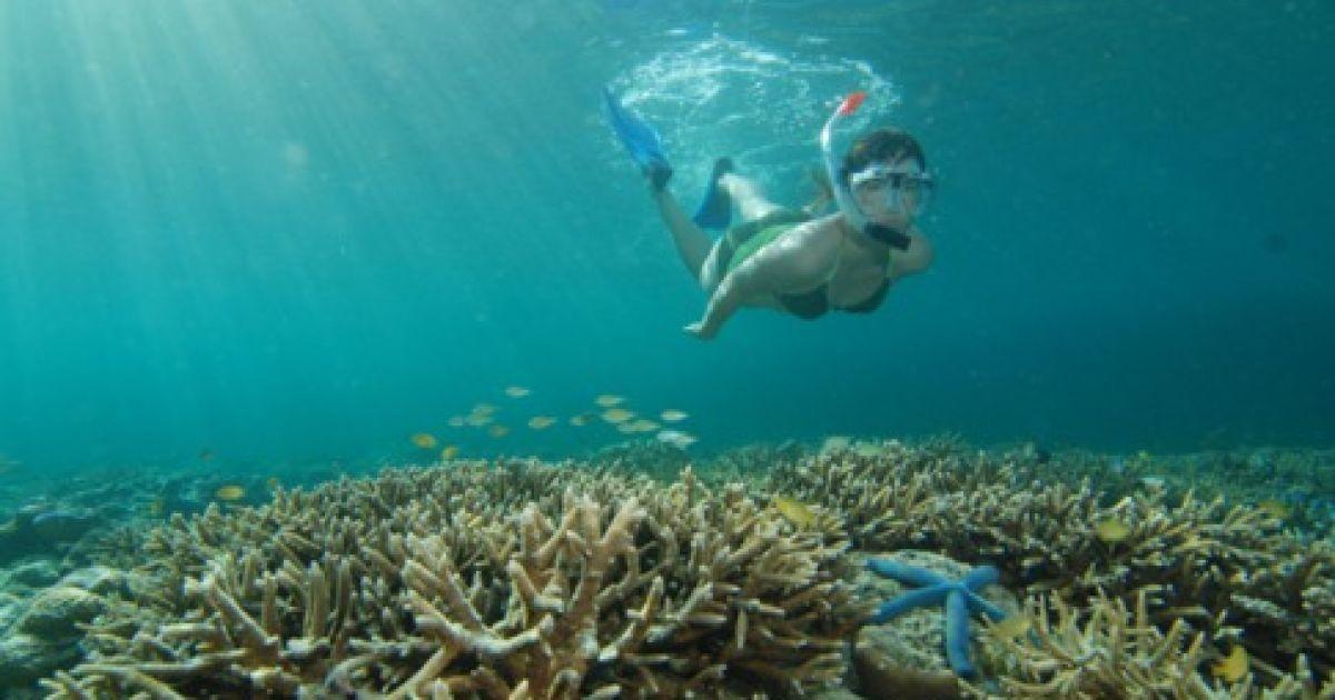 Підводне життя Індонезії @ Forbes