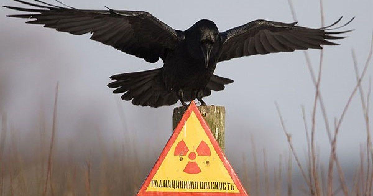 26 квітня 1986 року в Україні сталася наймасштабніша техногенна катастрофа - аварія на Чорнобильській атомній електростанції. @ AFP