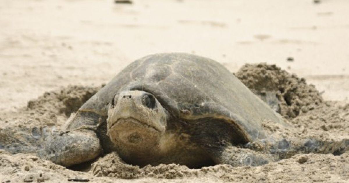 Черепахи Гренади @ Forbes