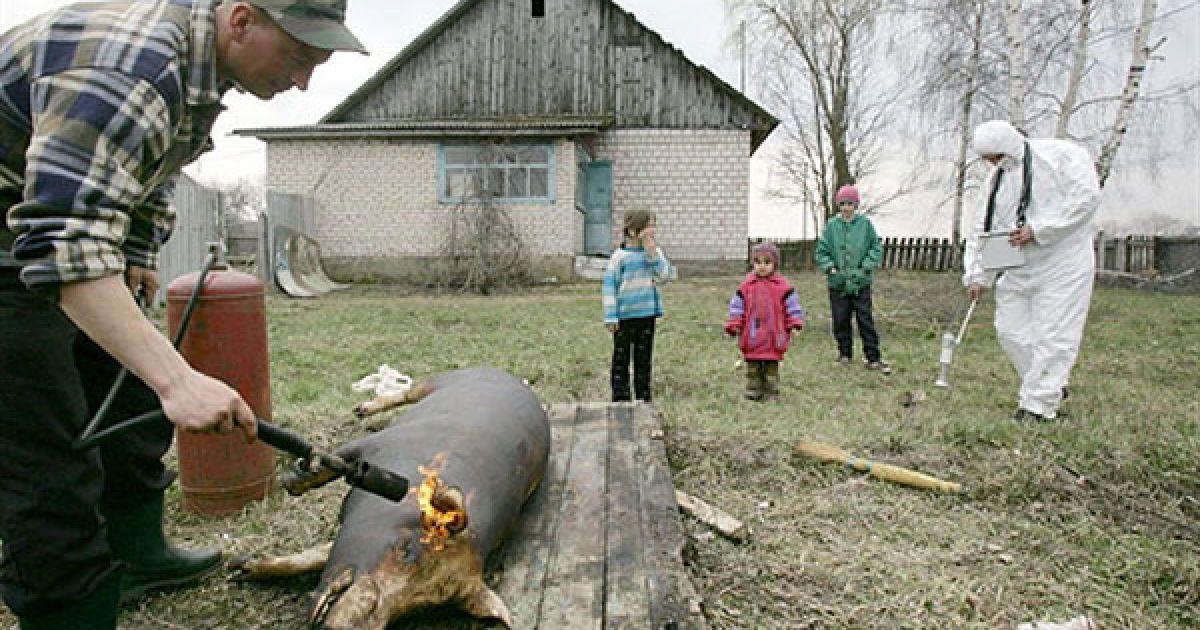 Білорусь, Губаревичі, 30-км зона. Співробітник Білоруського підрозділу радіаційної екології перевіряє рівень радіації. @ AFP