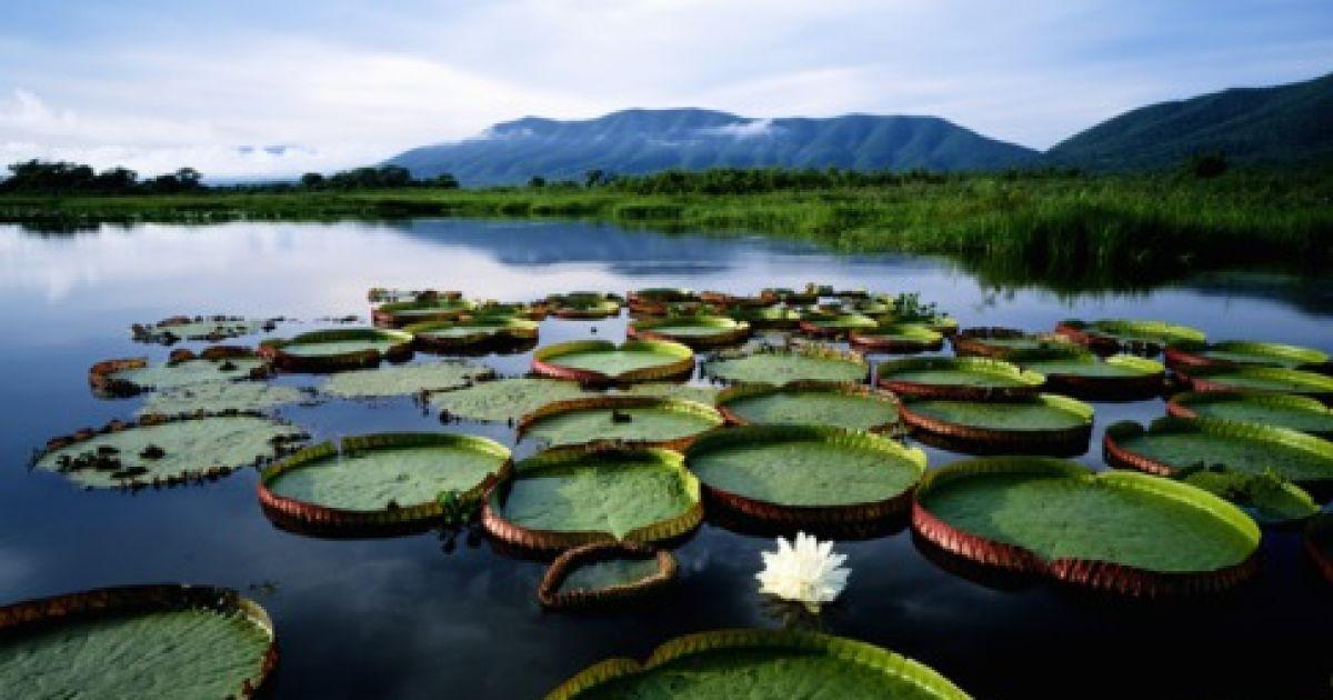 """Бразильська """"водна країна"""" Пантана @ Forbes"""