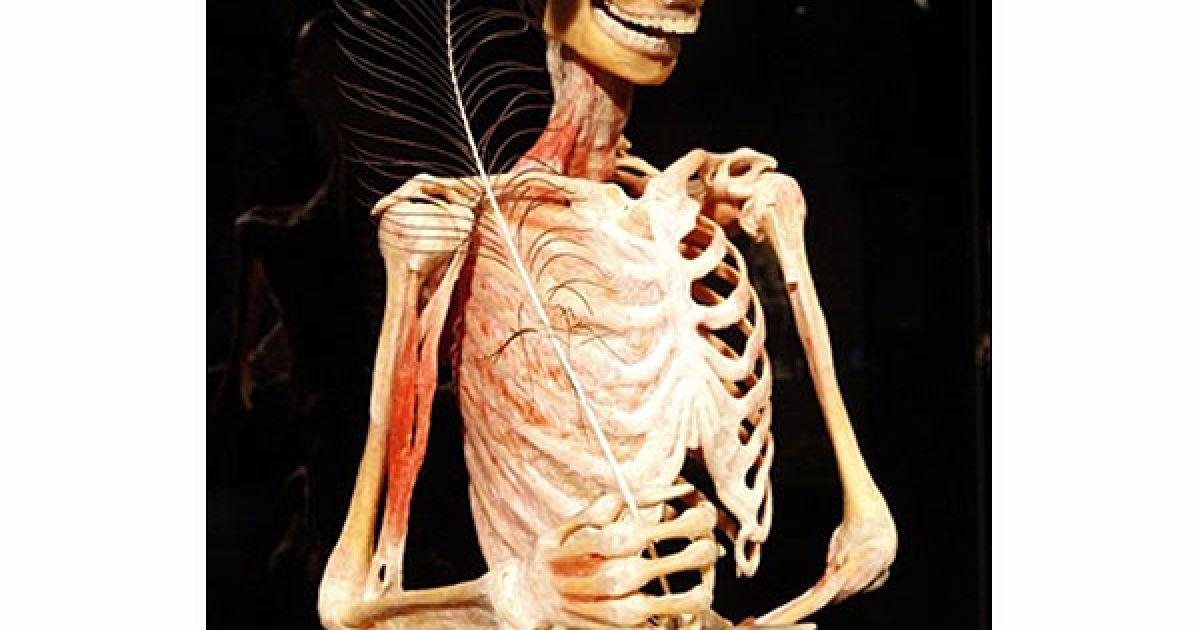 Пластинація дохволяє зберігати людське тіло для медичних досліджень. @ AFP