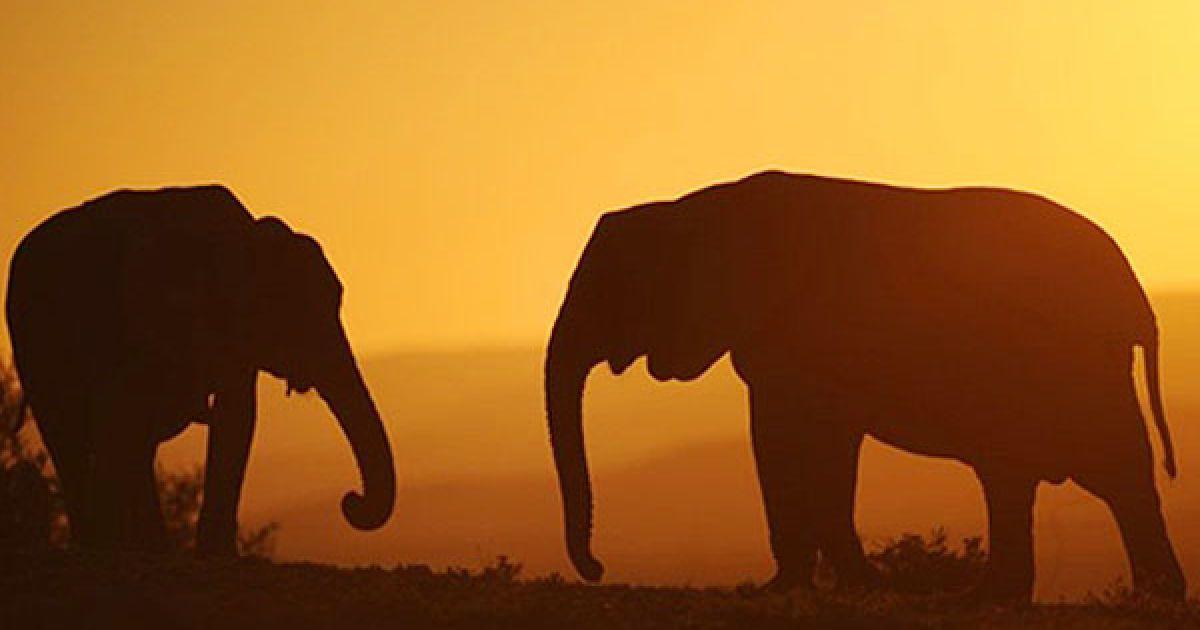 Крім слонів у парку мешкають останні у світі капські носороги, 21 чорний буйвіл, антилопи, рептилії, більше 185 видів рідкісних птахів. @ AFP