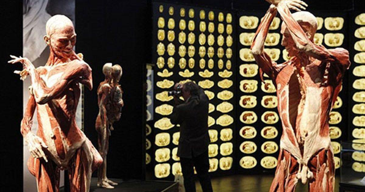Експонати виставки демонструють, яким чином змінюється людське тіло з віком. @ AFP