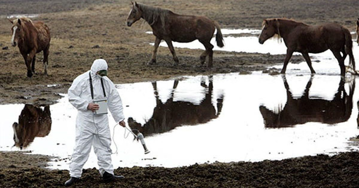 Білорусь, Воротець, 30-км зона. Співробітник Білоруського підрозділу радіаційної екології вимірює рівень радіації. @ AFP