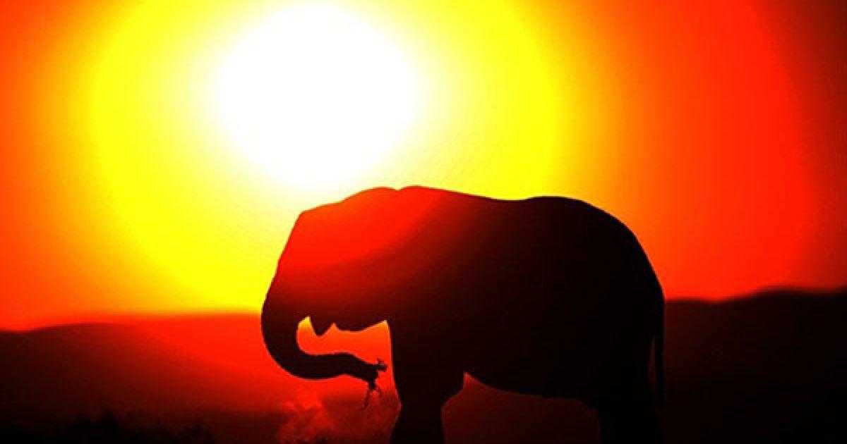 Національний парк слонів Еддо у Східному Кейпі поблизу Кейптауна є одним з найвідоміших місць проживання слонів @ AFP