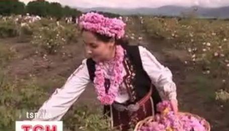 Болгарія - трояндовий рай