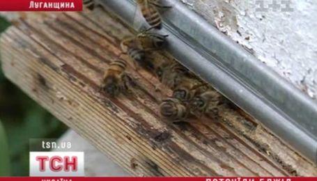 Мертві бджоли не гудуть