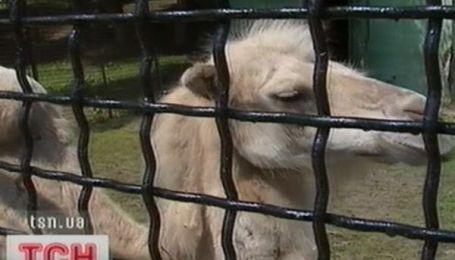 У Запоріжжі рятують верблюда
