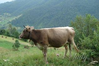Село Квасы: релакс по-закарпатски