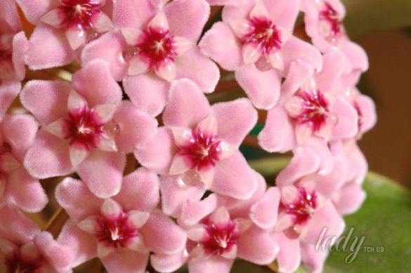 цветы_4