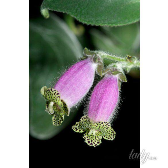 цветы_5