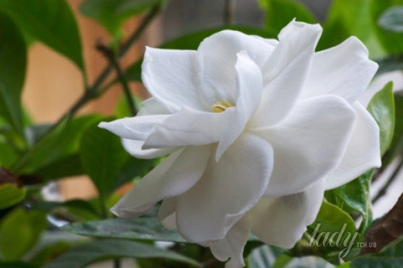 цветы_7
