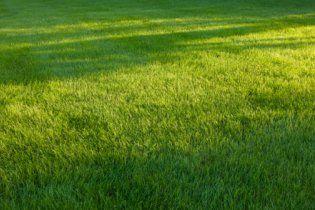 Как вырастить роскошный газон