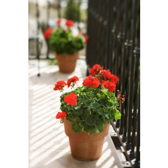 Цветущий балкон_6