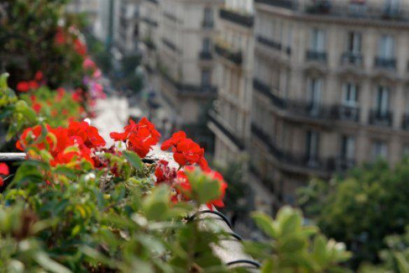 Цветущий балкон_3