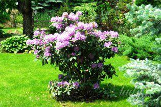 Как растить цветы в тени и на солнце