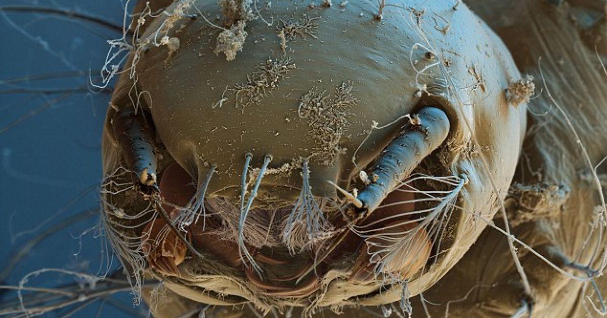 """Збільшена в тисячі разів личинка комара дозволяє розгледіти всі деталі молодого """"обличчя"""" @ Solent news and photo agency"""