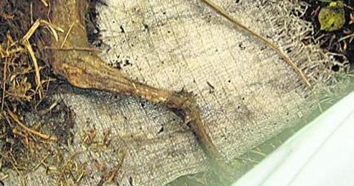 На Полтавщині знайшли шість трупів чупакабр @ Сегодня