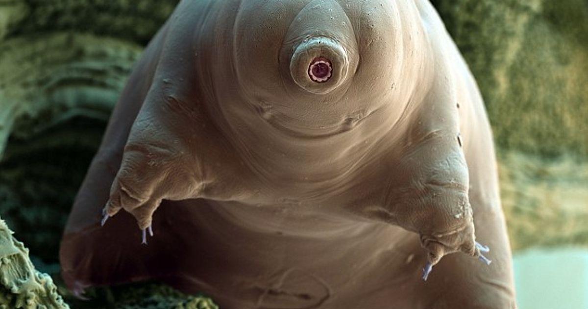 Водяний ведмідь - Арнольд Шварценегер світу мікробів - усміхається на камеру @ Solent news and photo agency