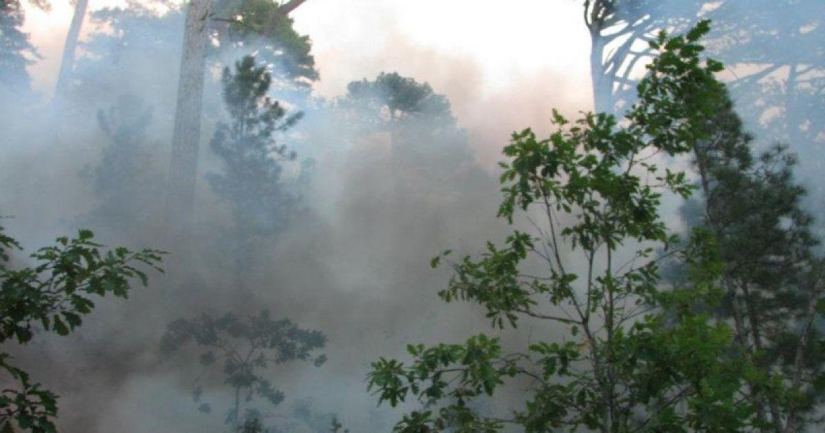 Причиной пожара в районе горы Лопата стал поджог @ Новости Крыма