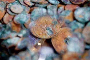 Археологи знайшли один з найбільших в європейській історії скарбів