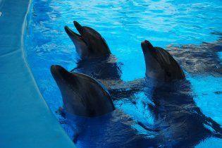 У анексованому Криму від початку року на берег викинуло понад 300 дельфінів