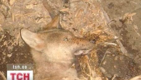 В Луганске в одном из городских частных клубов голодают животные