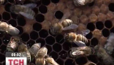 Цьогоріч меду буде мало