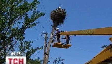На Прикарпатье электрики попытались спасти гнездо аистов