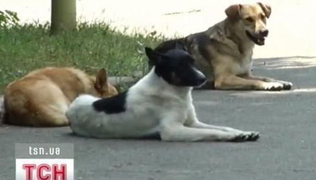 Відвідувачі столичного ботсаду скаржаться на бродячих псів