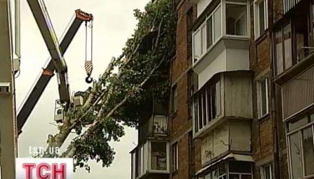 Жители дома, на который в понедельник упало дерево, едва пережили вчерашний ливень
