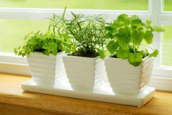 Комнатные растения_1