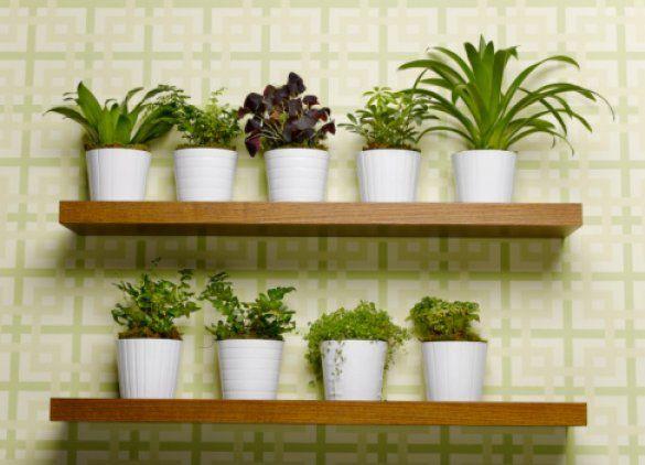 Комнатные растения_2