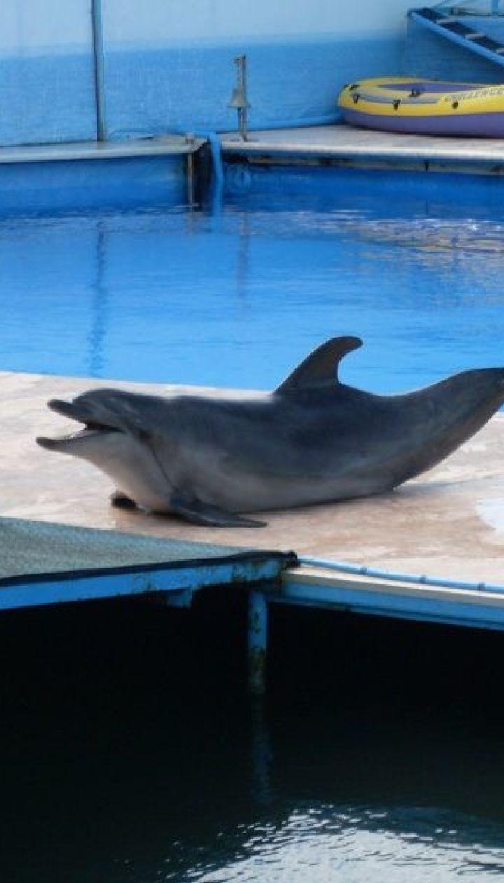 И посетить дельфинарий