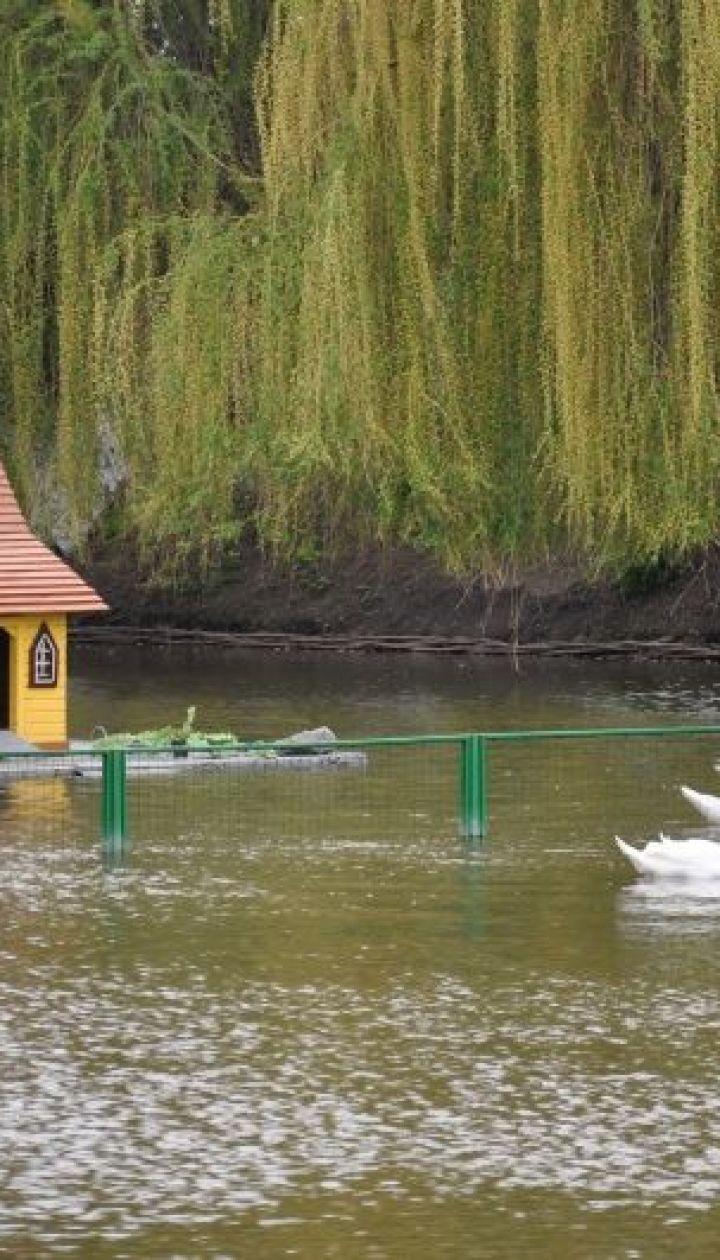 Миргородская лужа