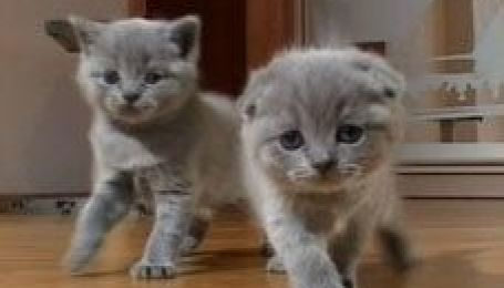 Все про котиків