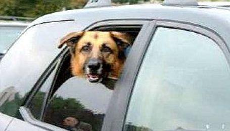 Тварини в авто