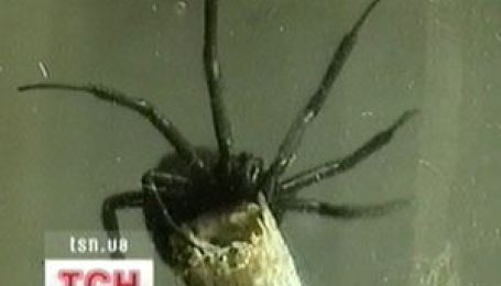 Павуки наступають