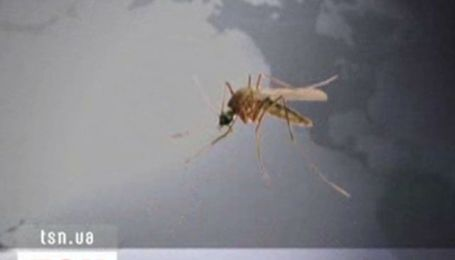 Комарі атакують