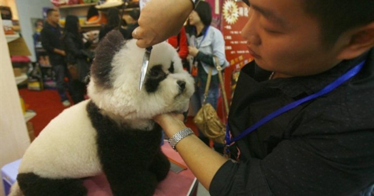 China Pet Fair @ AFP