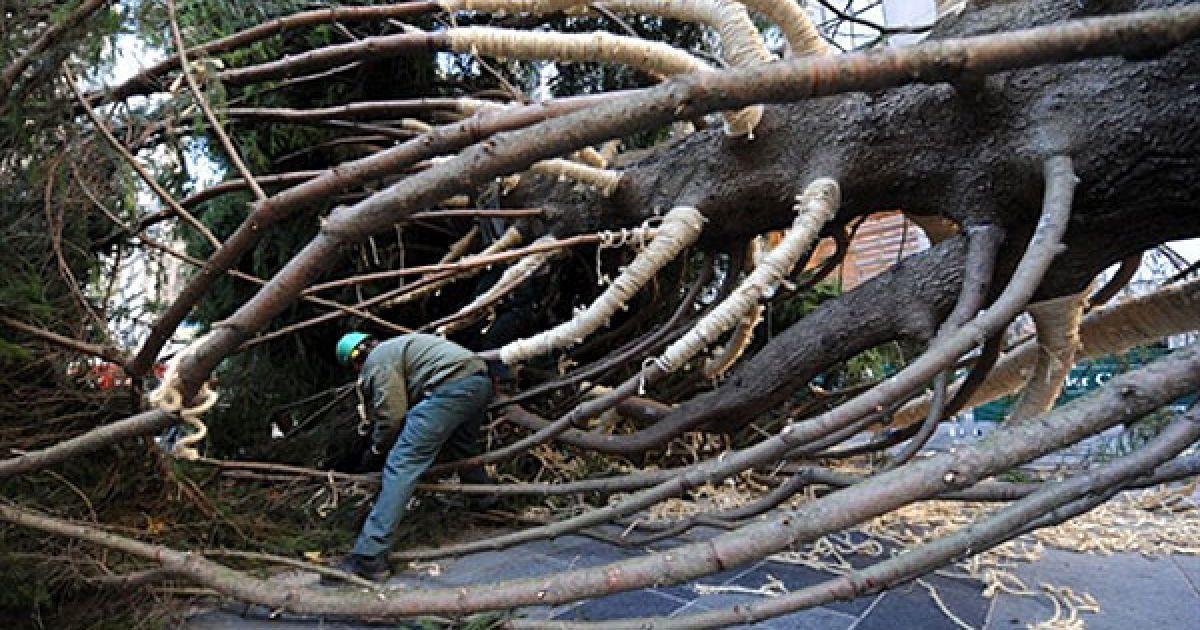 США, Нью-Йорк. Чоловік працює над ялинкою висотою 22,5 м, яка стане головною ялинкою на Різдво у Рокфеллер-центрі. @ AFP