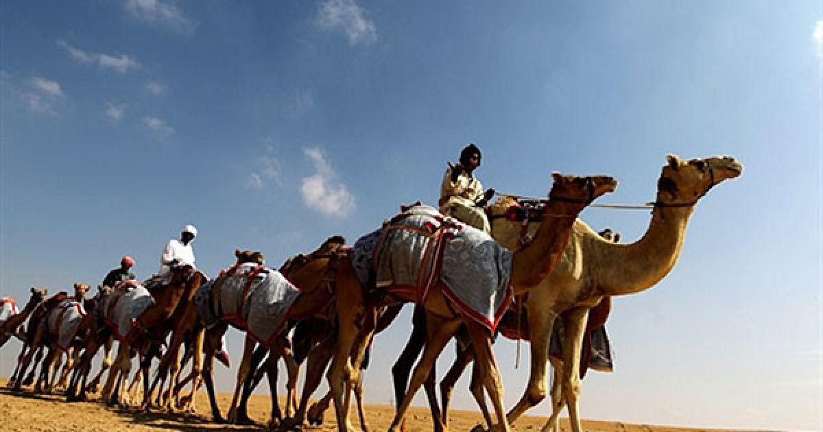 Об'єднані Арабські Емірати, Ліва. Верблюди йдуть пустелею у Ліві. @ AFP