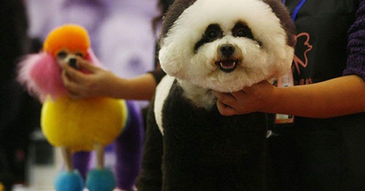 Китай, Ухань. Собаки зі своїми власниками готуються до участі у конкурсі краси для собак на шостому китайському ярмарку домашніх тварин, який провели в місті Ухань, провінція Хубей. @ AFP