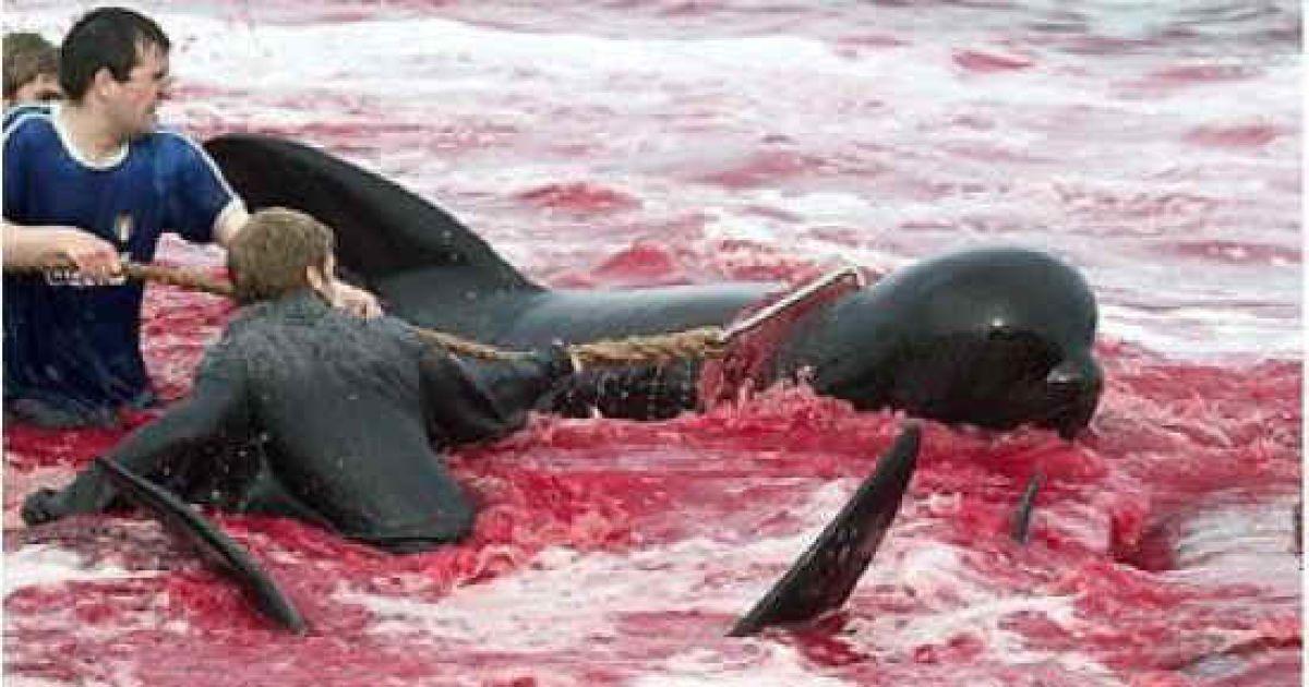 Массовое уничтожение дельфинов перерабатывающий завод макулатура