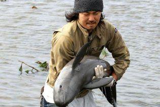 Японець врятував дельфінятко, якого цунамі винесло на рисове поле