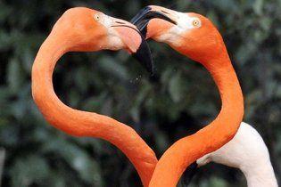 Як у світі святкували День усіх закоханих
