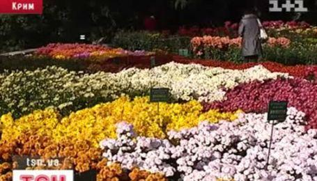 Хризантемы приглашают на бал